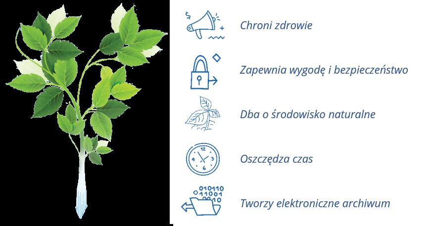 Zielona roślina, którą wspiera ekoFaktura